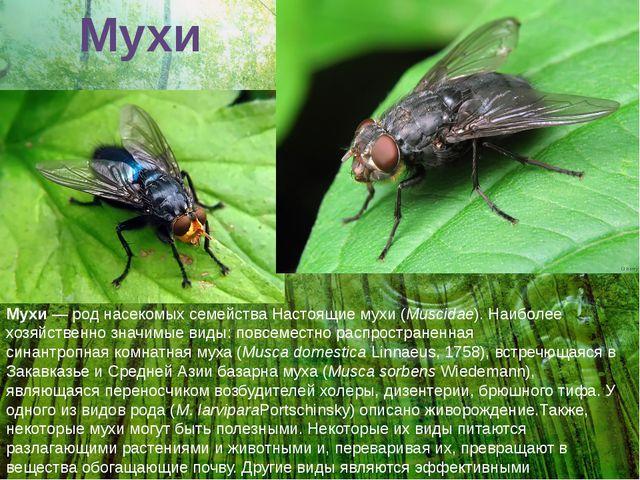 Мухи Мухи— род насекомых семействаНастоящие мухи(Muscidae). Наиболее хозяй...