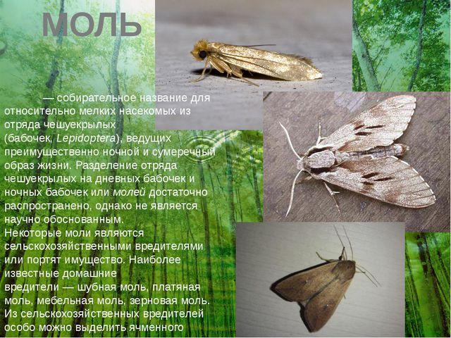 МОЛЬ Мо́ли— собирательное название для относительно мелких насекомых из отря...