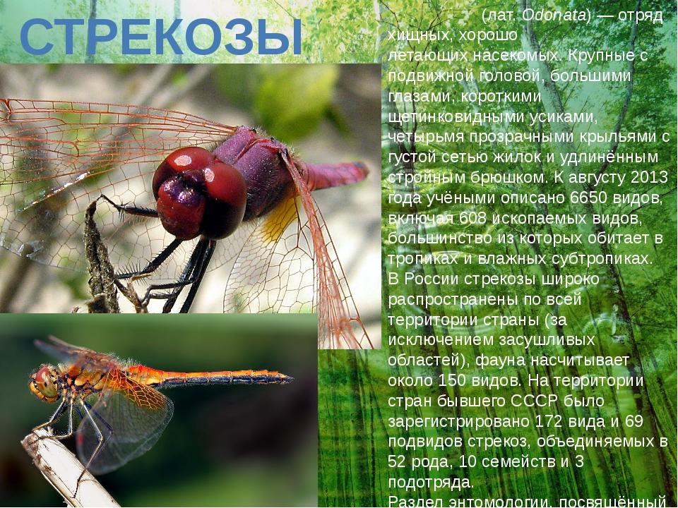 СТРЕКОЗЫ Стреко́зы(лат.Odonata)— отряд хищных, хорошо летающихнасекомых....
