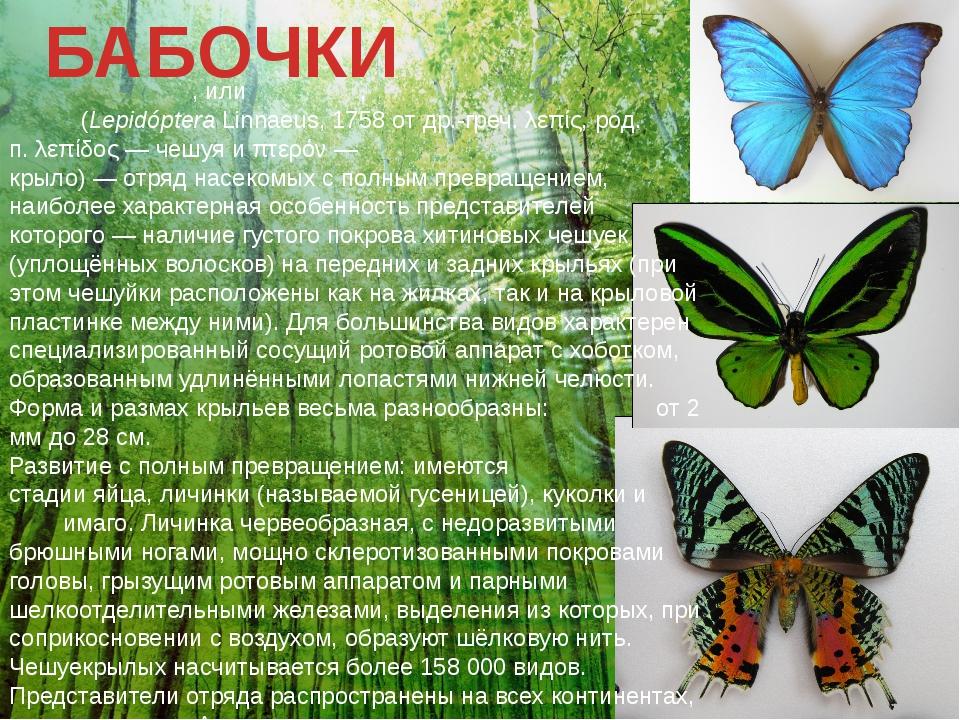 БАБОЧКИ Чешуекры́лые, илиба́бочки,мотыльки́, мо́ли(LepidópteraLinnaeus,1...