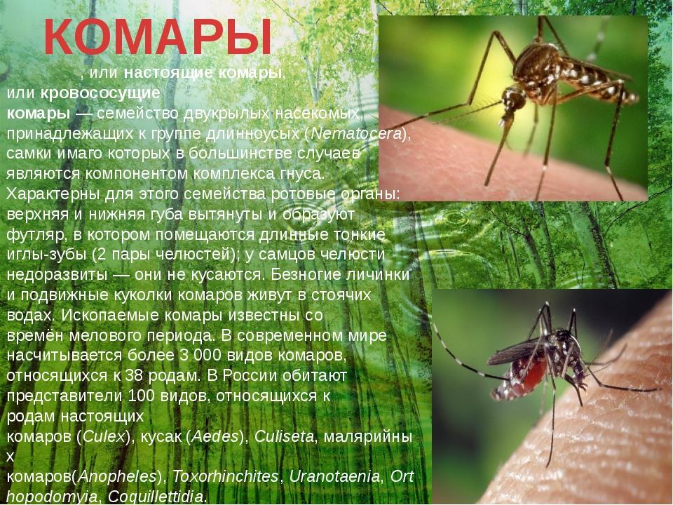 КОМАРЫ Комары́, илинастоящие комары, иликровососущие комары—семействодву...