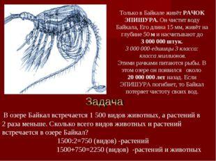 Только в Байкале живёт РАЧОК ЭПИШУРА. Он чистит воду Байкала, Его длина 15 мм