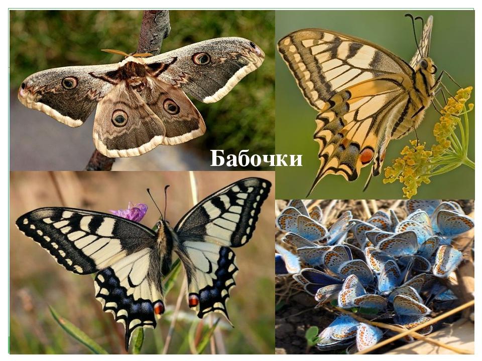 Бабочки Бабочки