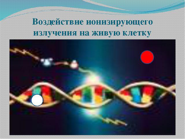 Воздействие ионизирующего излучения на живую клетку