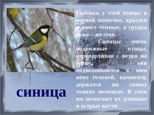 синица Головка у этой птицы в черной шапочке, крылья и хвост темные, а грудка