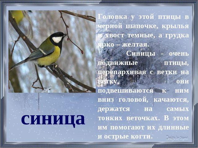 синица Головка у этой птицы в черной шапочке, крылья и хвост темные, а грудка...