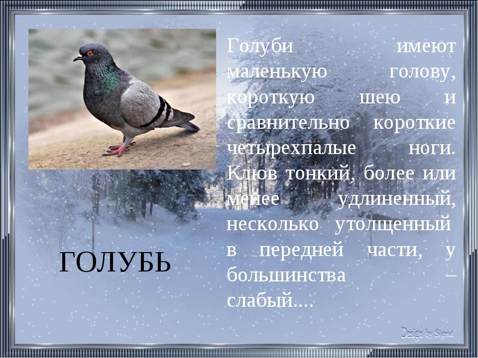 ГОЛУБЬ Голуби имеют маленькую голову, короткую шею и сравнительно короткие че...
