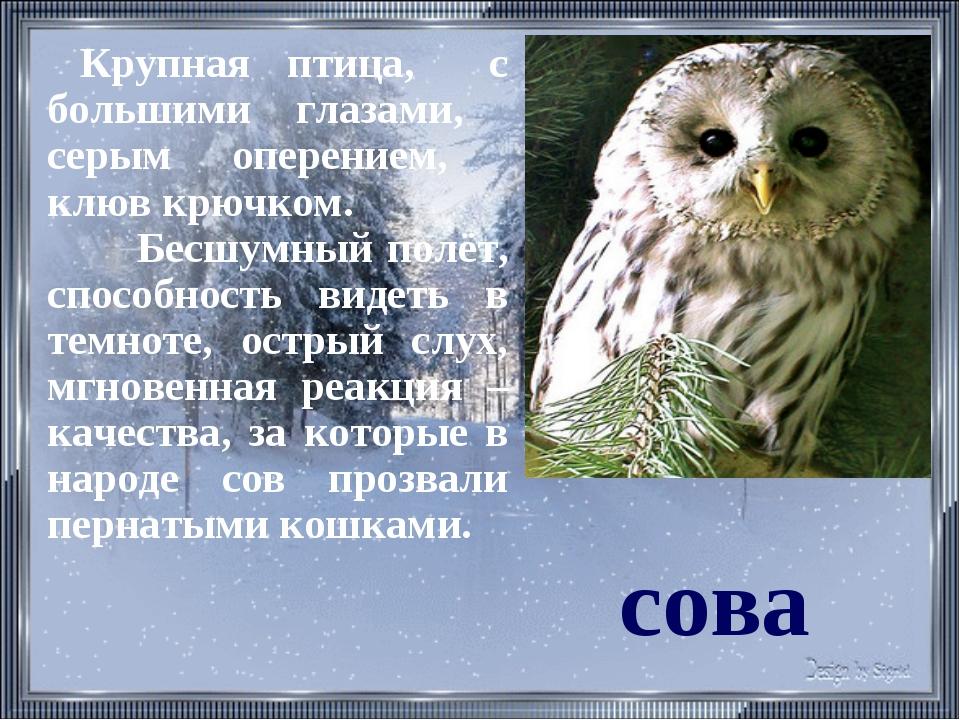 сова Крупная птица, с большими глазами, серым оперением, клюв крючком. Бесшум...