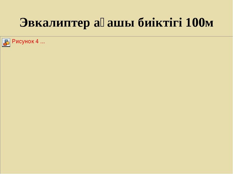 Эвкалиптер ағашы биіктігі 100м
