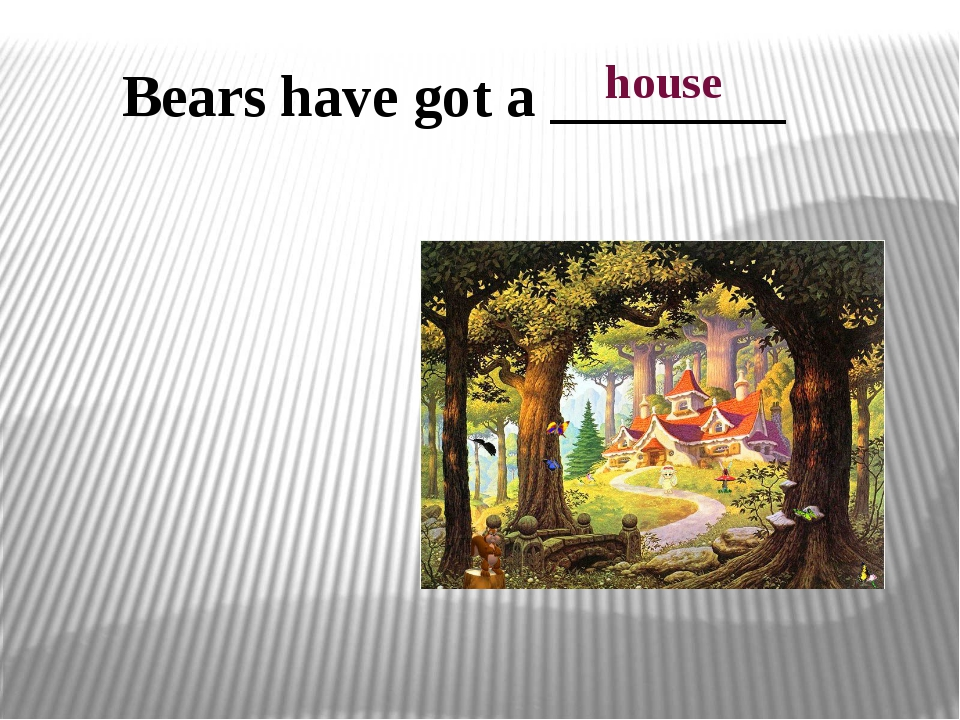Bears have got a ________ house