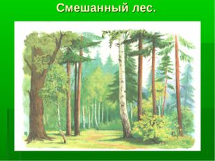 Смешанный лес.