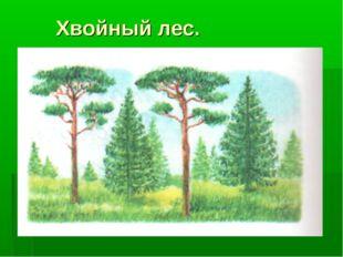 Хвойный лес.