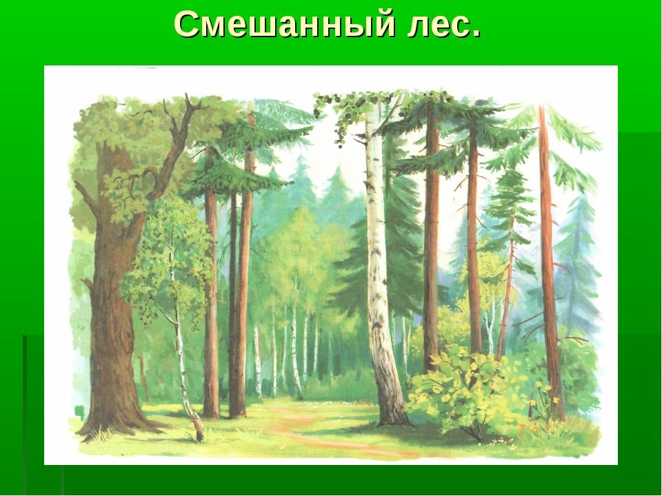 Смешанные леса рисунок детей 10 лет