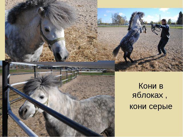 Кони в яблоках , кони серые