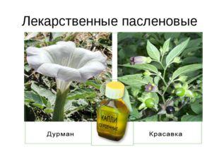 Лекарственные пасленовые