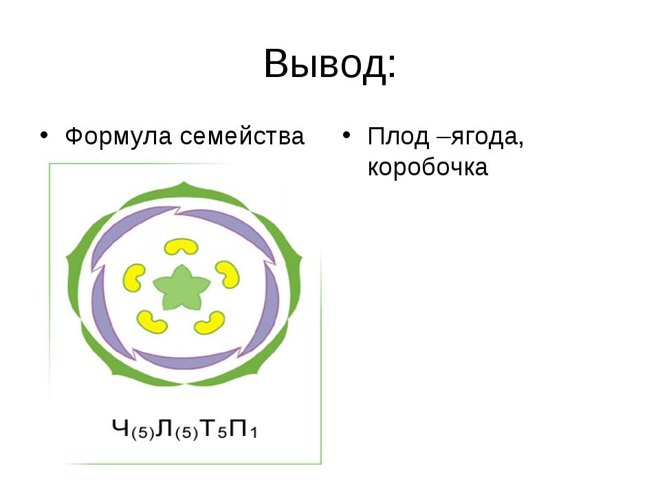 Вывод: Формула семейства Плод –ягода, коробочка