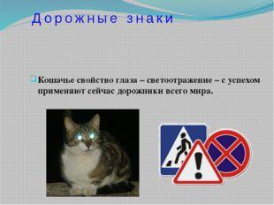 Кошачье свойство глаза – светоотражение – с успехом применяют сейчас дорожник