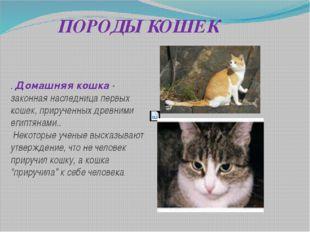 ПОРОДЫ КОШЕК . Домашняя кошка - законная наследница первых кошек, прирученных
