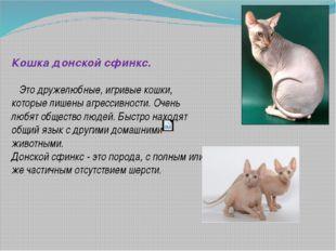 Кошка донской сфинкс. Это дружелюбные, игривые кошки, которые лишены агресси