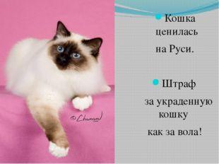 Кошка ценилась на Руси. Штраф за украденную кошку как за вола!