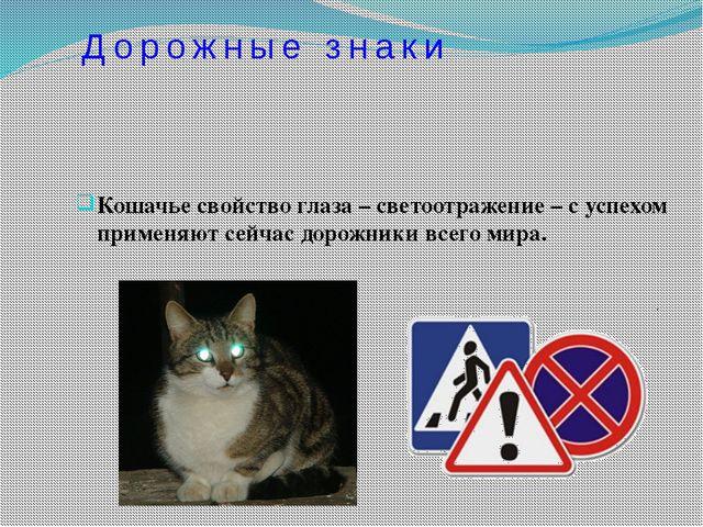 Кошачье свойство глаза – светоотражение – с успехом применяют сейчас дорожник...