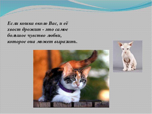 Если кошка около Вас, и её хвост дрожит - это самое большое чувство любви, к...