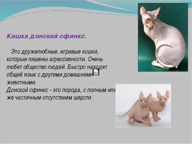 Кошка донской сфинкс. Это дружелюбные, игривые кошки, которые лишены агресси...