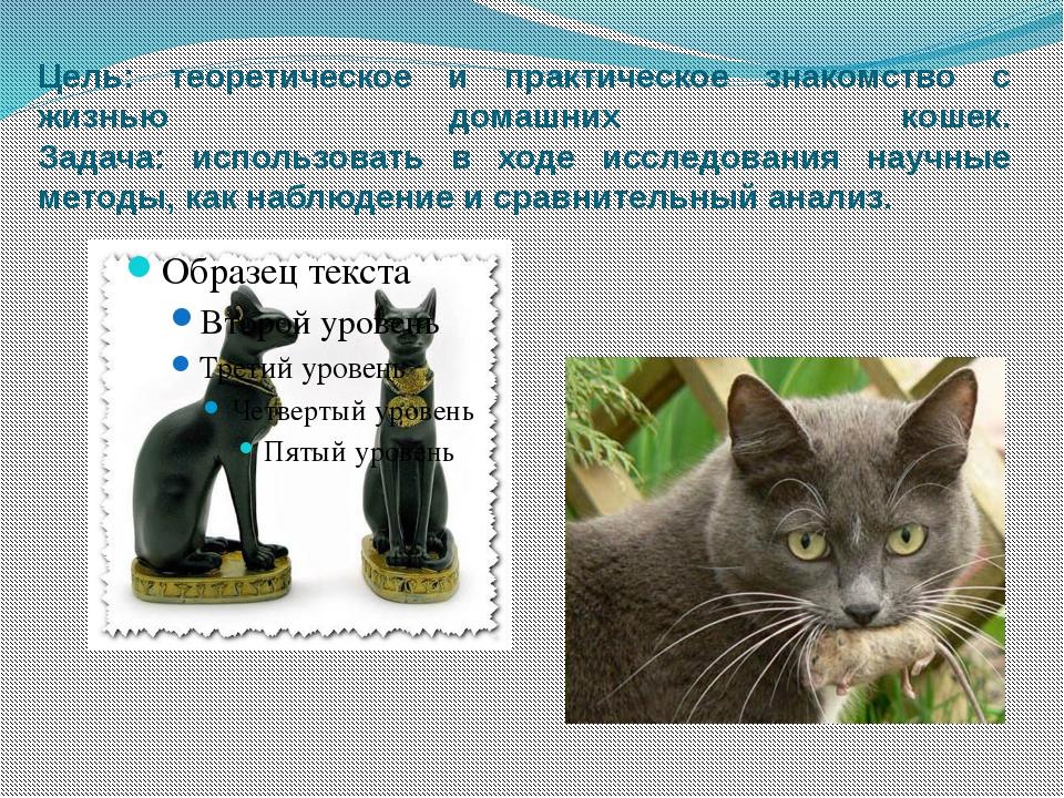 Цель: теоретическое и практическое знакомство с жизнью домашних кошек. Задача...