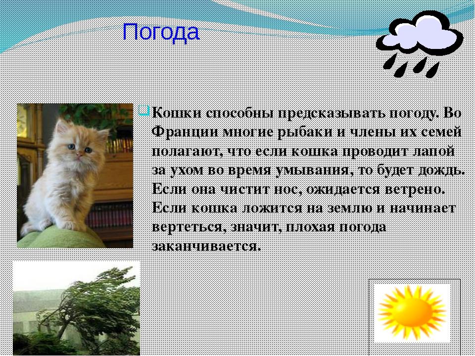 Кошки способны предсказывать погоду. Во Франции многие рыбаки и члены их семе...