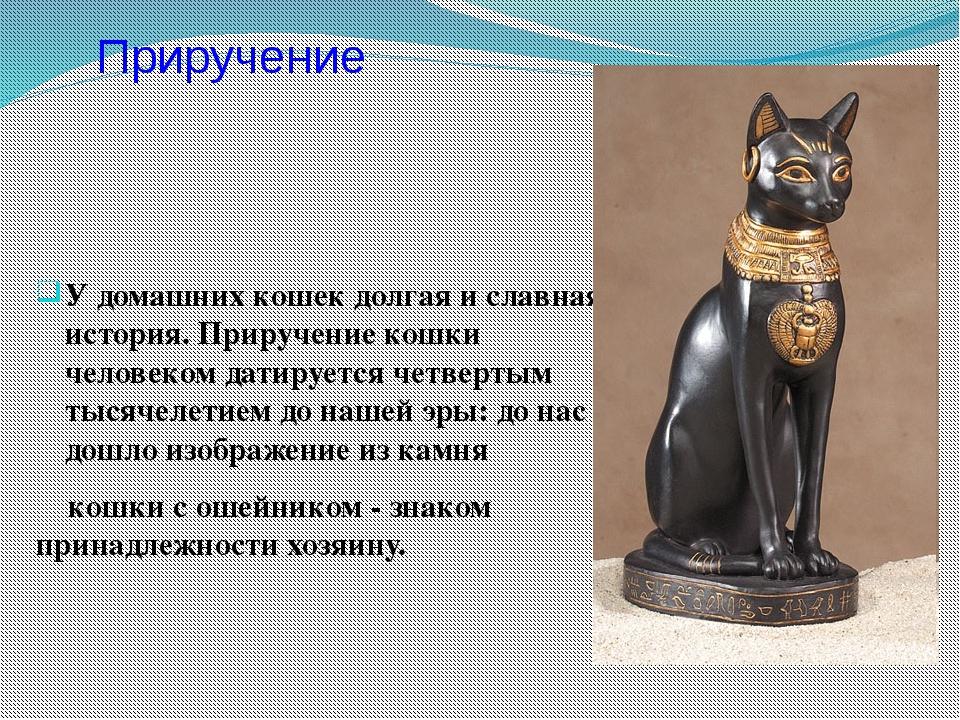 У домашних кошек долгая и славная история. Приручение кошки человеком датируе...