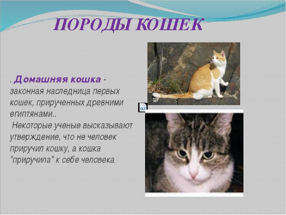 ПОРОДЫ КОШЕК . Домашняя кошка - законная наследница первых кошек, прирученных...