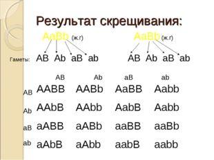 Результат скрещивания: AaBb (ж.г) AaBb (ж.г) Гаметы: AB Ab aB ab AB Ab aB ab