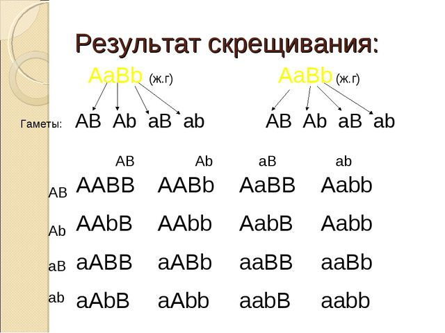 Результат скрещивания: AaBb (ж.г) AaBb (ж.г) Гаметы: AB Ab aB ab AB Ab aB ab...