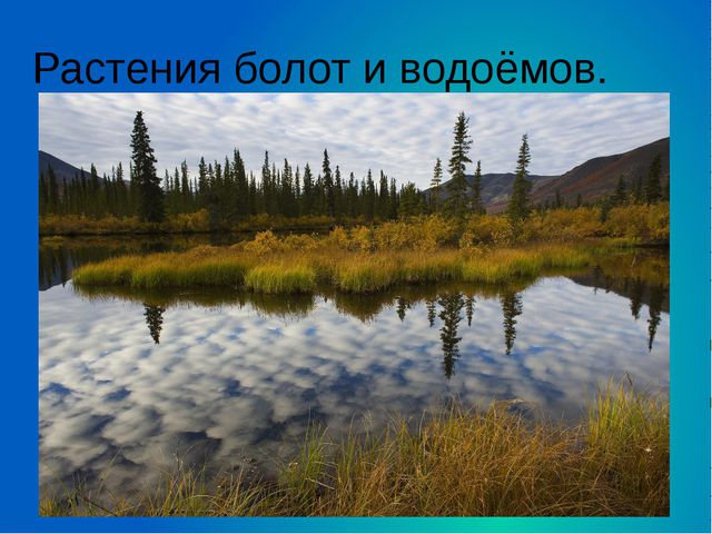 Растения болот и водоёмов.