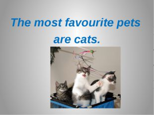 The most favourite pets are cats.