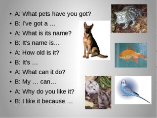 A: What pets have you got? B: I've got a … A: What is its name? B: It's name
