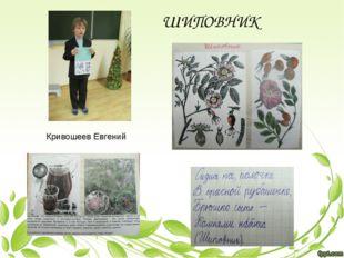 Кривошеев Евгений ШИПОВНИК