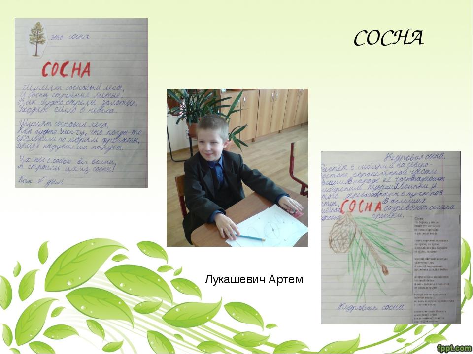 Лукашевич Артем СОСНА
