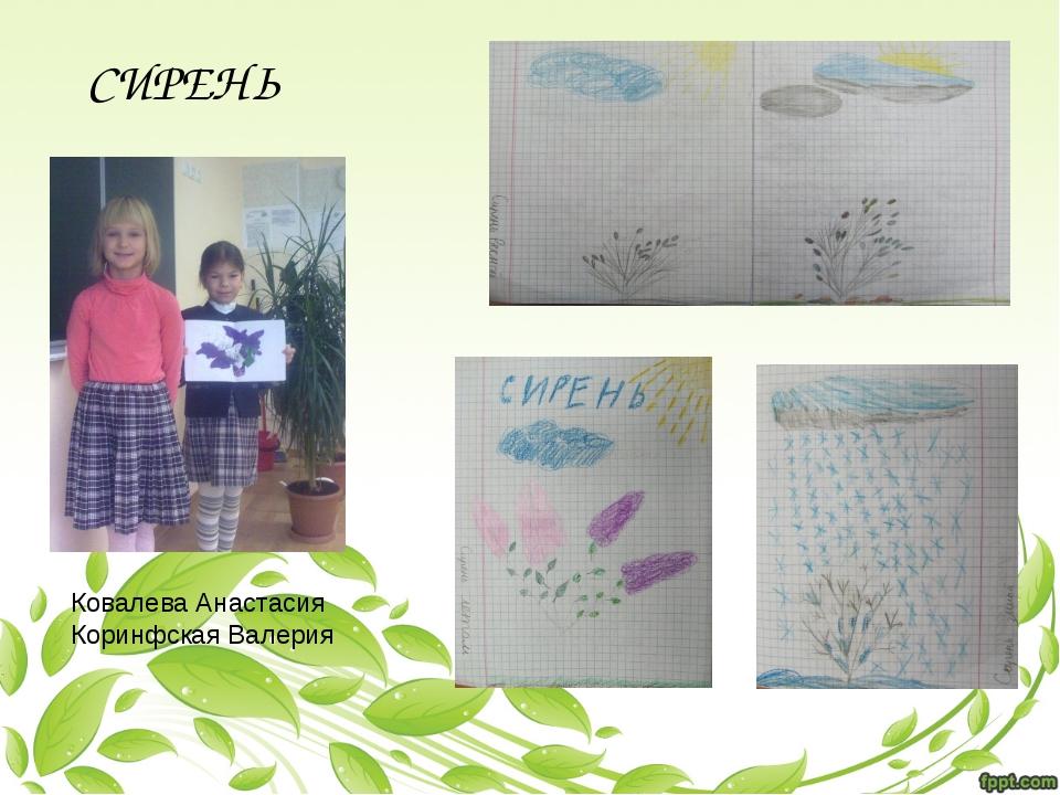 Ковалева Анастасия Коринфская Валерия СИРЕНЬ