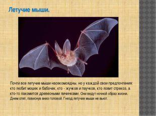 Летучие мыши. Почти все летучие мыши насекомоядны, но у каждой свои предпочте