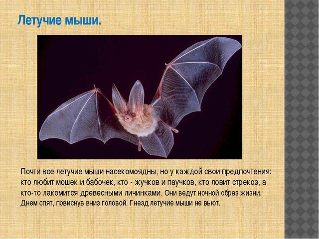 Летучие мыши. Почти все летучие мыши насекомоядны, но у каждой свои предпочте...