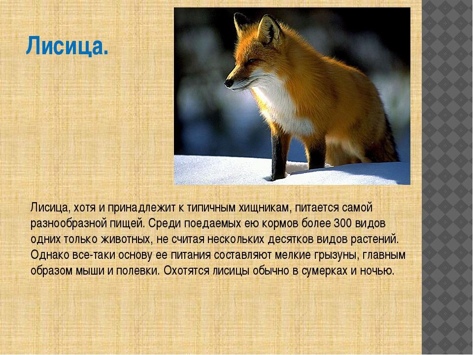 Лисица. Лисица, хотя и принадлежит к типичным хищникам, питается самой разноо...