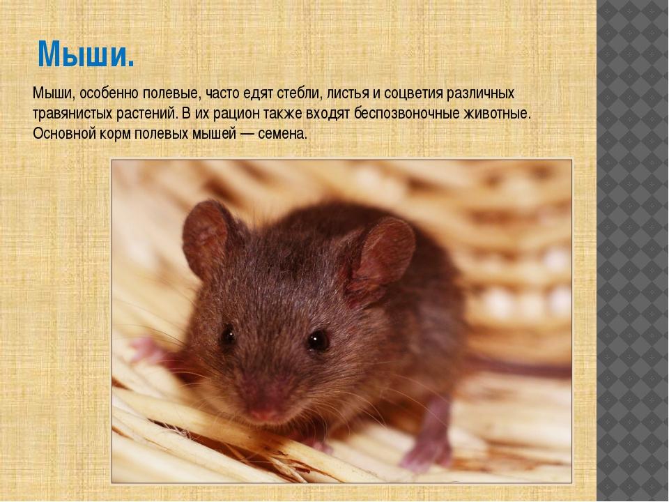 Мыши. Мыши, особенно полевые, часто едят стебли, листья и соцветия различных...