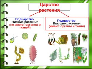 Царство растения Подцарство Низшие растения (не имеют органов и тканей) Подца