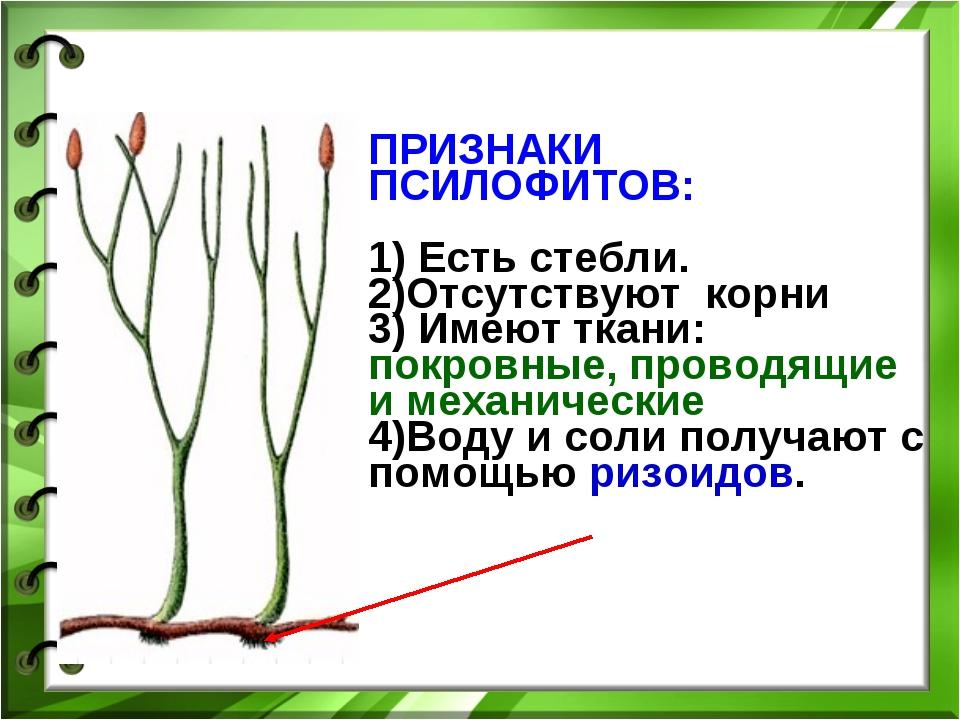 ПРИЗНАКИ ПСИЛОФИТОВ: 1) Есть стебли. 2)Отсутствуют корни 3) Имеют ткани: покр...