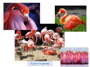 Розовый фламинго Қызғылт тырналар