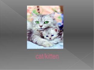 cat/kitten