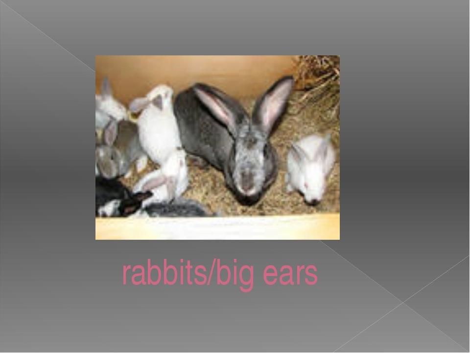 rabbits/big ears