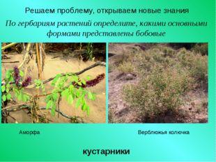 Решаем проблему, открываем новые знания По гербариям растений определите, как