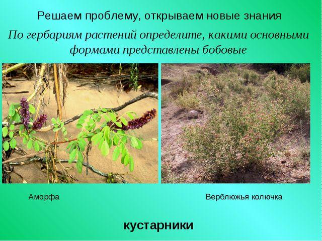 Решаем проблему, открываем новые знания По гербариям растений определите, как...